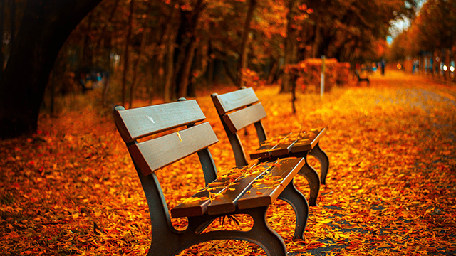 Bench covered in fall leaves